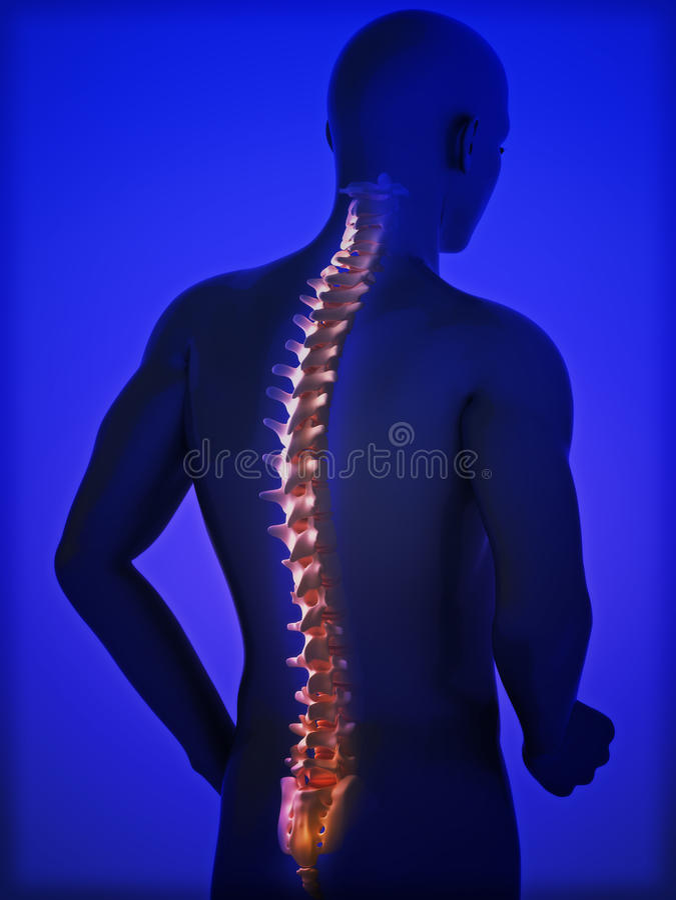 Espina dorsal humana ilustración del vector
