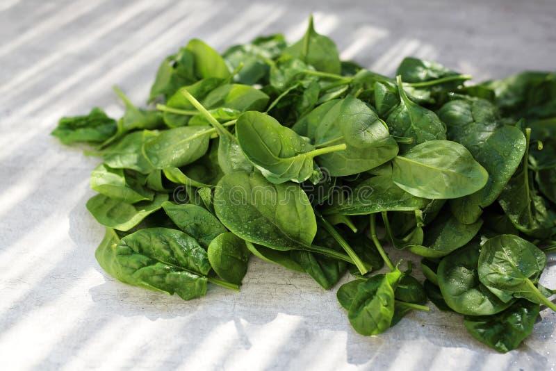 Espinafres do bebê, folhas verdes frescas no contador de cozinha foto de stock royalty free