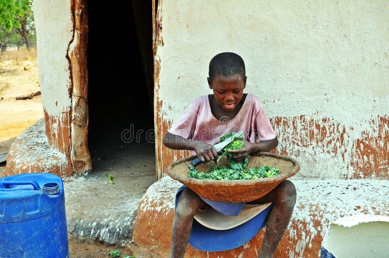 Espinafres novos do corte da menina de Batonka, Gokwe norte, Zimbabwe fotografia de stock