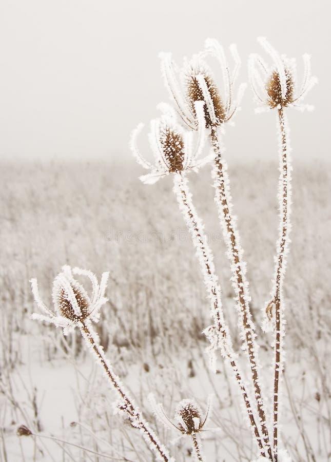 Espinas congeladas imagen de archivo libre de regalías