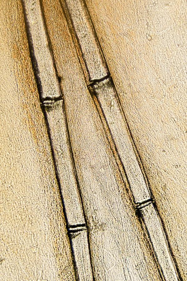 Espinas de pez dentro de una aleta pectoral de la perca imagen de archivo libre de regalías