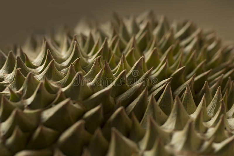 Espinas del Durian fotografía de archivo libre de regalías