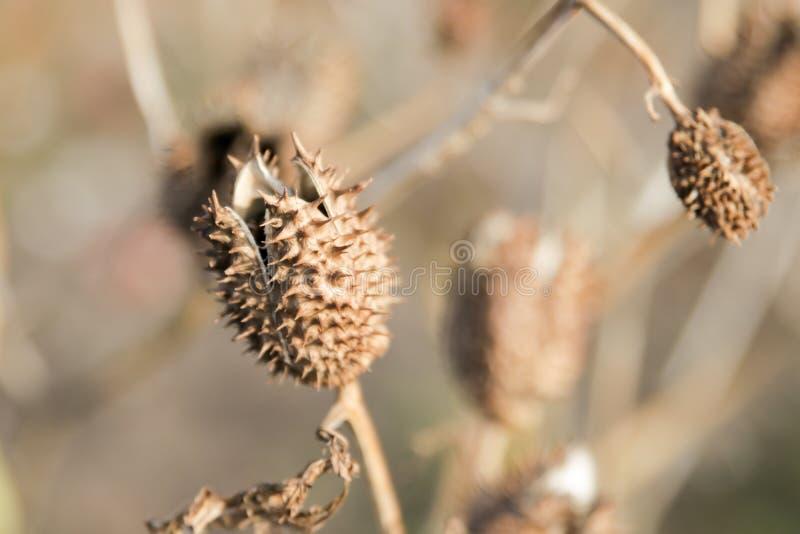 Espinas secas y plantas secas imágenes de archivo libres de regalías