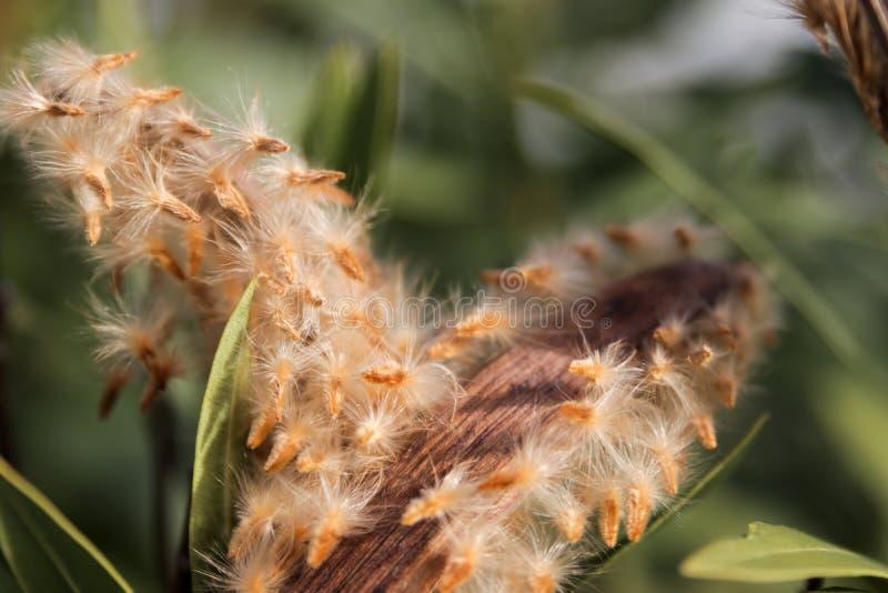 Espinas secas y plantas secas foto de archivo libre de regalías