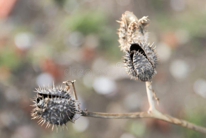 Espinas secas y plantas secas fotografía de archivo