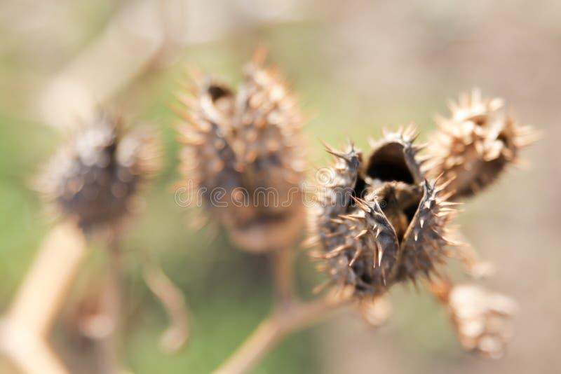 Espinas secas y plantas secas fotografía de archivo libre de regalías