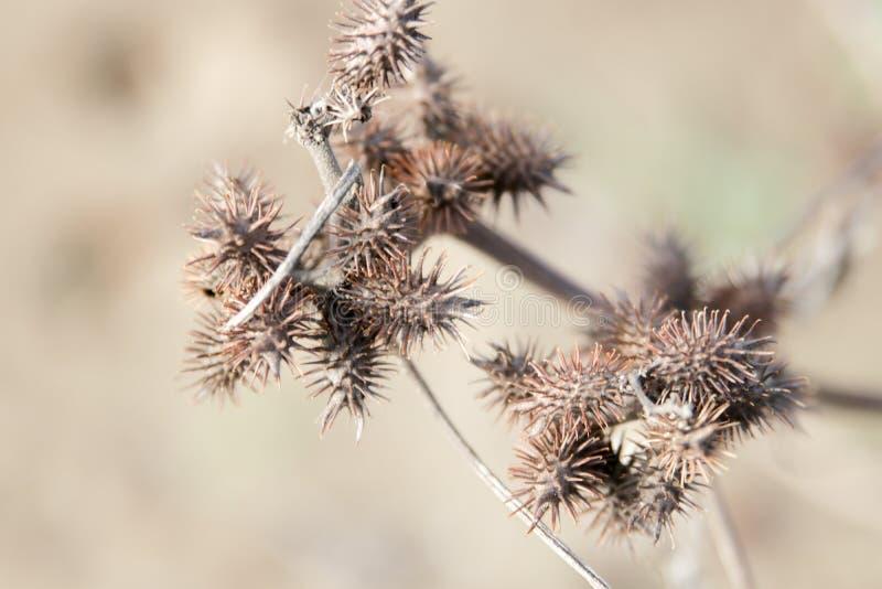 Espinas secas y plantas secas imagenes de archivo