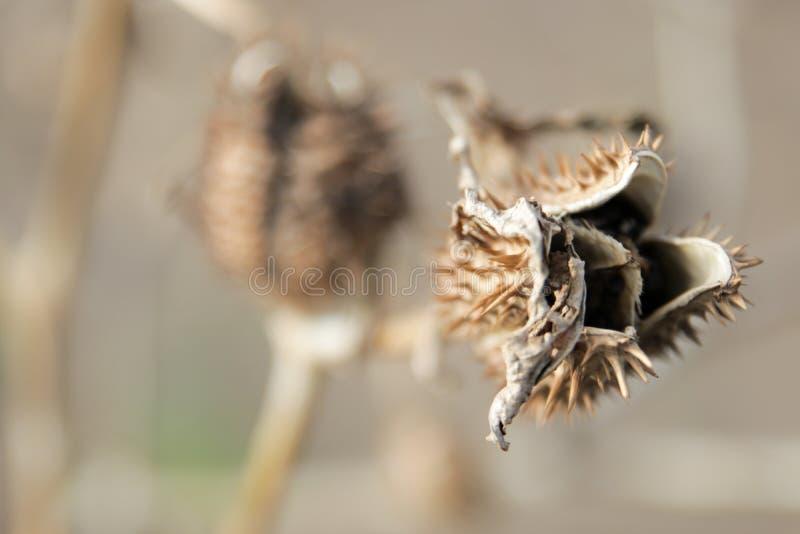 Espinas secas y plantas secas fotos de archivo