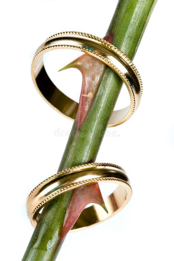 Espinhos do casamento fotografia de stock