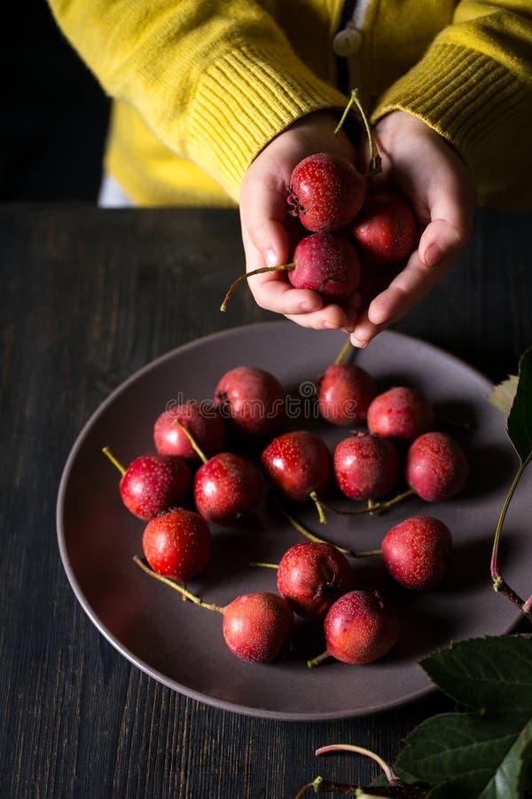 Espino de la fruta en manos fotografía de archivo