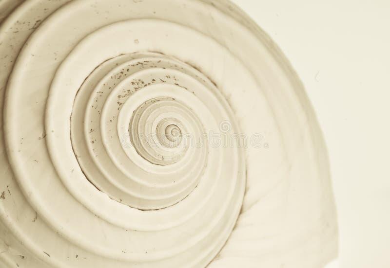 Espiral abstrata do caracol fotografia de stock royalty free