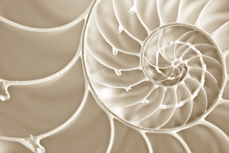 Espiral de Fibbonachi en shell del nautilus imágenes de archivo libres de regalías