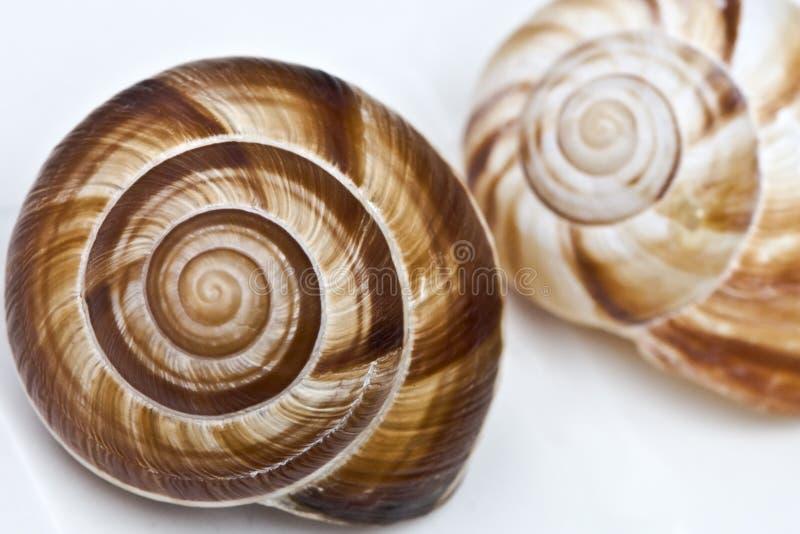 Espiral de Fibonacci fotografia de stock royalty free