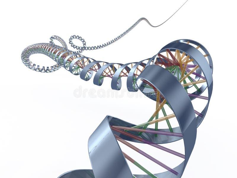 Espiral de la DNA