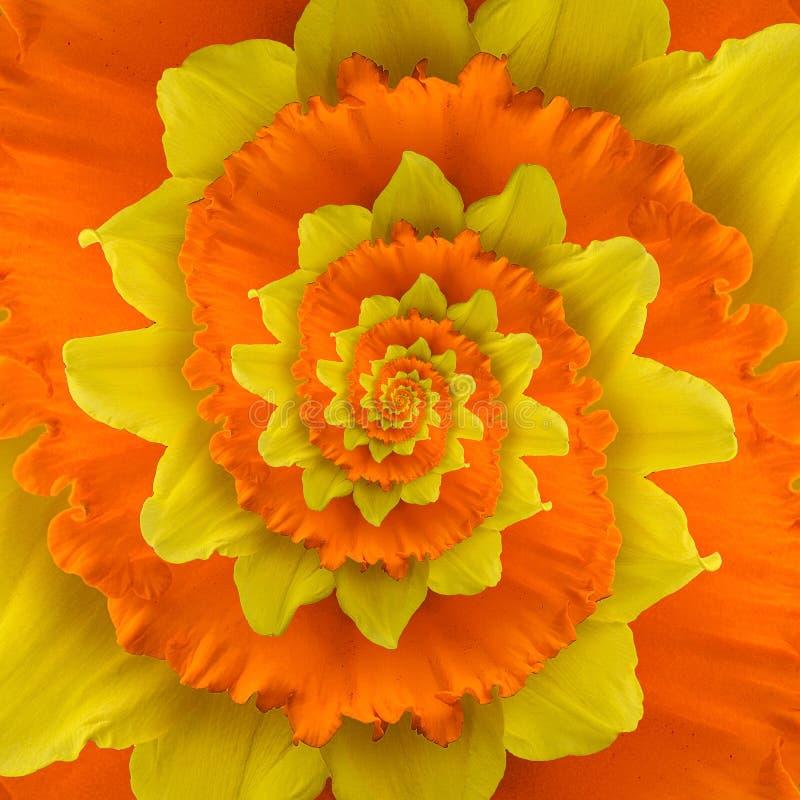 Espiral de la flor imágenes de archivo libres de regalías
