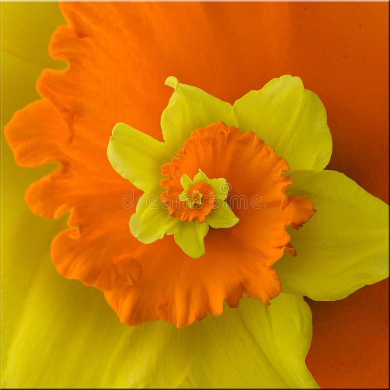 Espiral de la flor imagenes de archivo