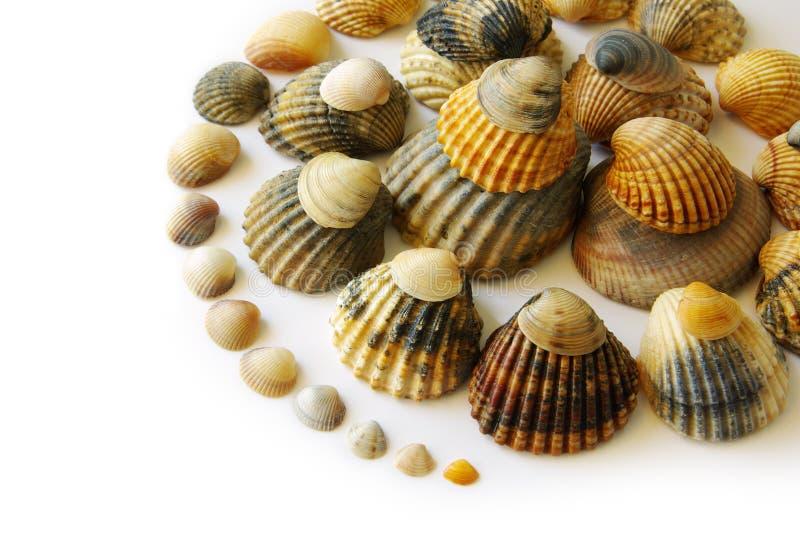 Espiral de los shelles imagen de archivo libre de regalías