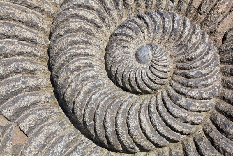 Espiral del caracol fotografía de archivo libre de regalías