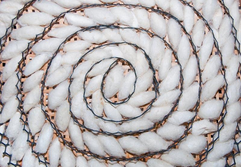 A espiral do teste padrão do casulo do bicho-da-seda foto de stock royalty free
