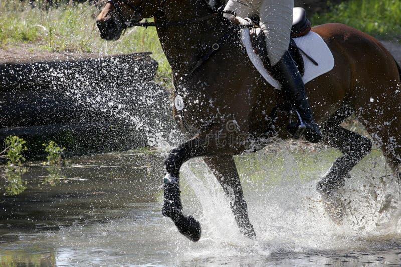 Espirro equestre fotografia de stock royalty free