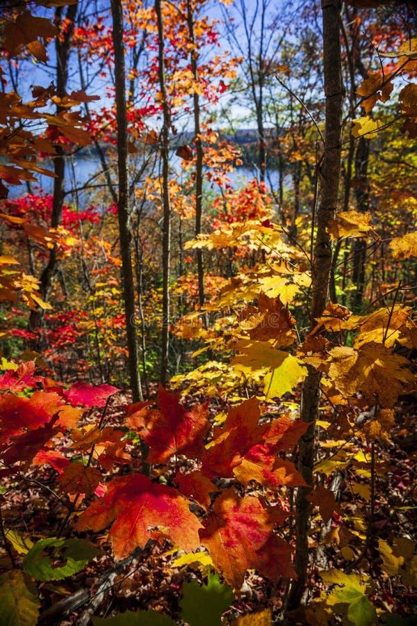 Esplendor del otoño fotos de archivo