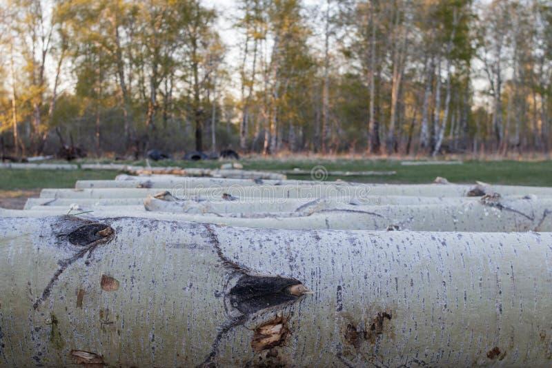 Esplogboeken die op een rij op een kleine zaagmolen in het platteland liggen Close-up Op de achtergrond - de lentebos royalty-vrije stock afbeelding