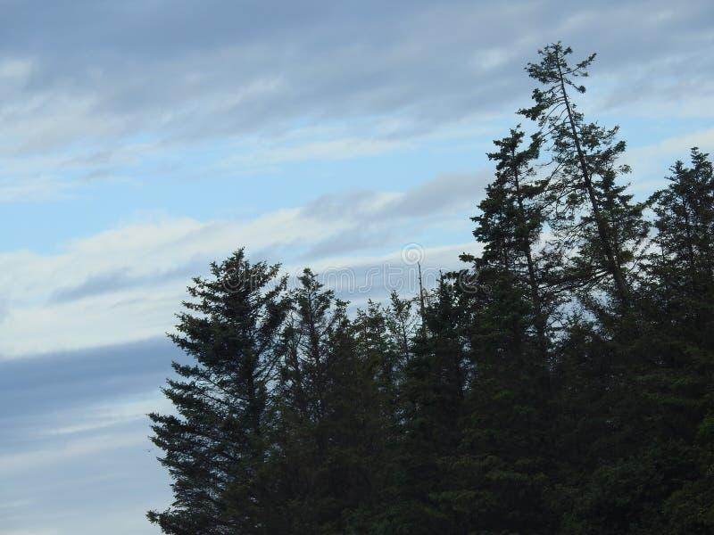Esplorando per Eagles nell'Alaska immagine stock