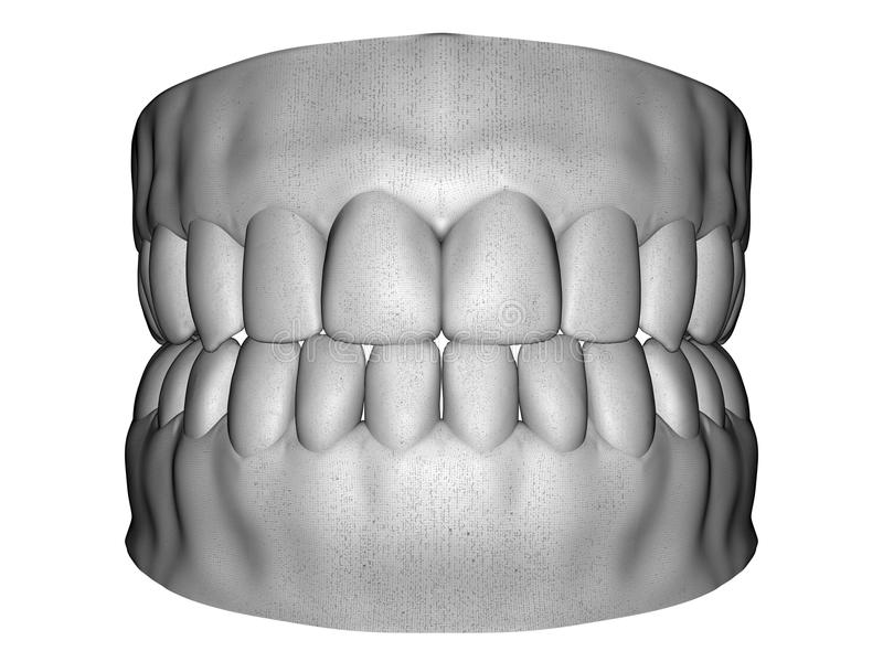 Esplorazione dentale del maschio adulto royalty illustrazione gratis