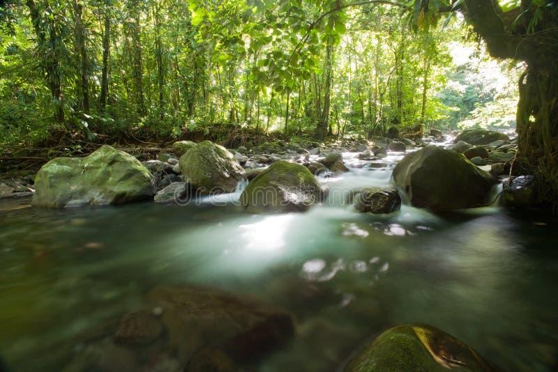 Esplorazioni del Dominica fotografia stock libera da diritti