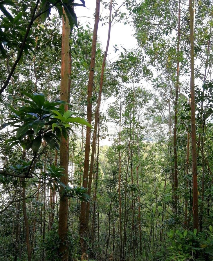 Esplori la bellezza della foresta immagini stock