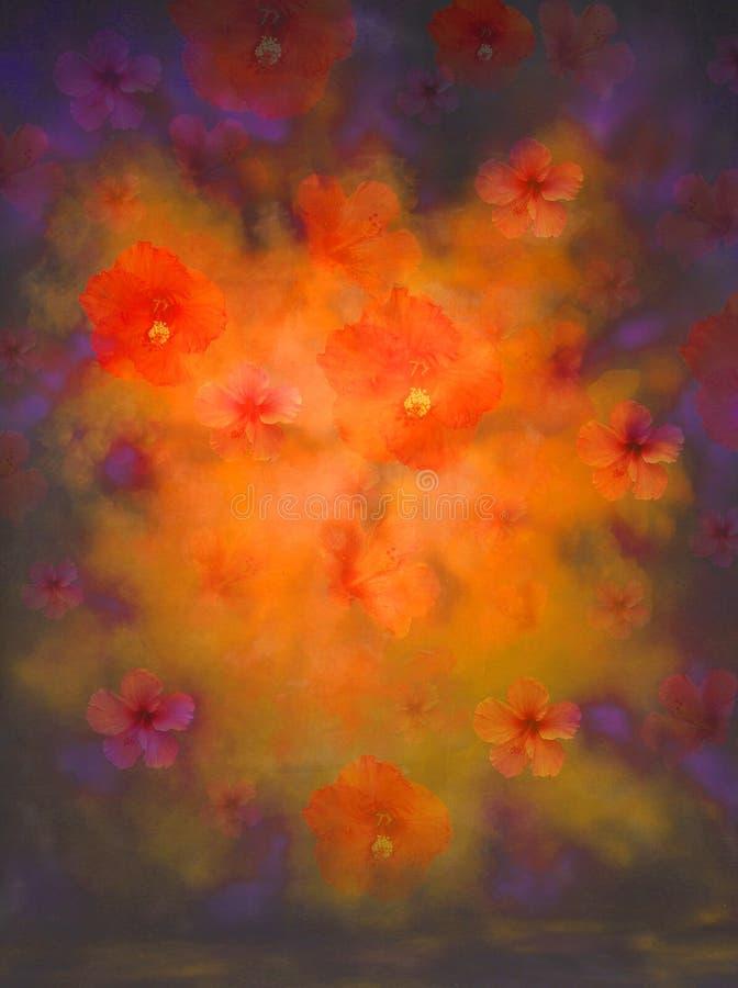 Esplosione del fiore dell'ibisco fotografie stock
