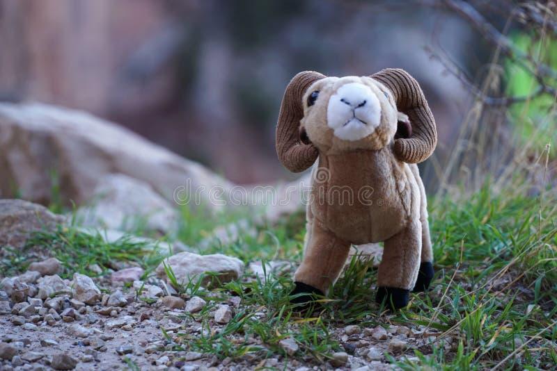Espolón de las ovejas de carnero con grandes cuernos del juguete con los cuernos grandes en los acantilados de Grand Canyon imagen de archivo libre de regalías