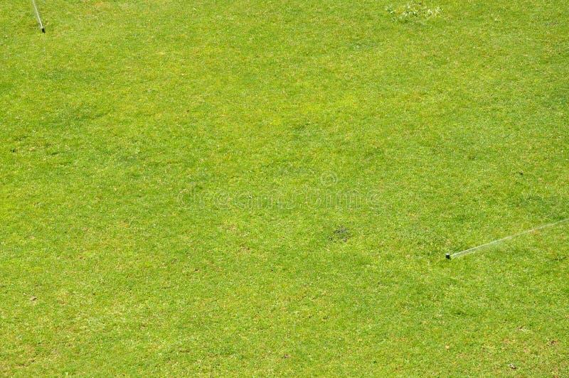 Espolvorines regando un jardín de hierba fotografía de archivo