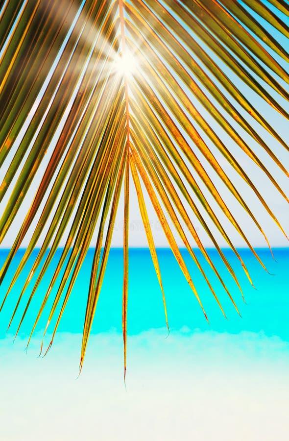 Esponga al sole i fasci con verde e le foglie di palma dell'oro sul fondo bianco delle Seychelles della sabbia del mare blu immagine stock