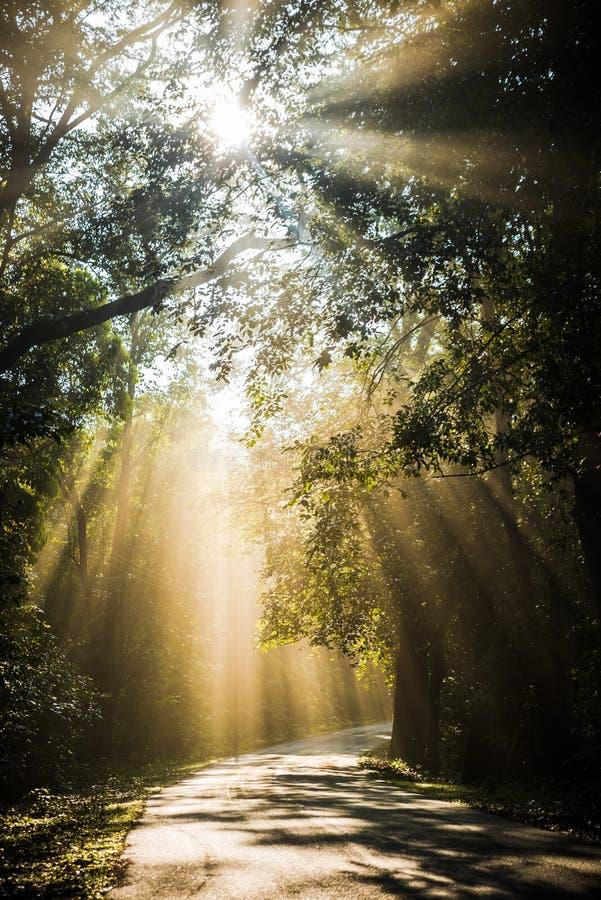 Esponga al sole i raggi attraverso gli alberi che cadono sulla strada fotografia stock