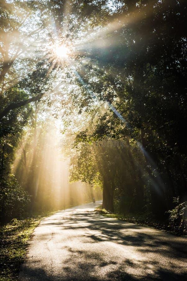 Esponga al sole i raggi attraverso gli alberi che cadono sulla strada immagini stock libere da diritti