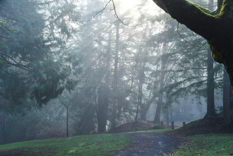Esponga al sole i raggi attraverso gli alberi in Redmond, parco di WA immagine stock libera da diritti