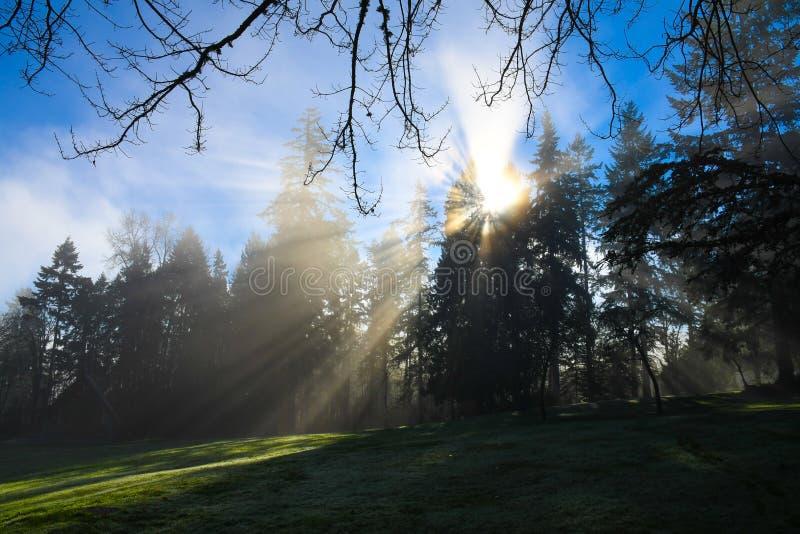 Esponga al sole i raggi che splendono attraverso gli alberi in Redmond, parco di WA fotografia stock libera da diritti