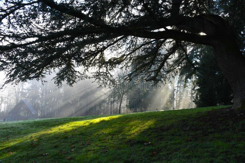Esponga al sole i raggi che splendono attraverso gli alberi in Redmond, parco di WA fotografia stock