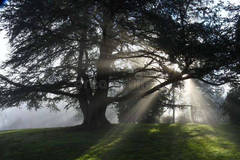 Esponga al sole i raggi che splendono attraverso gli alberi in Redmond, parco di WA immagine stock libera da diritti