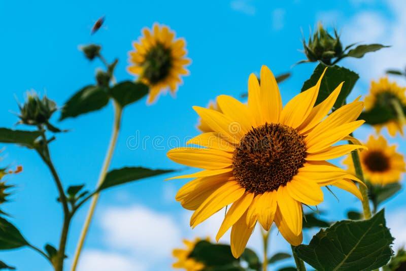 Esponga al sole il flovour fotografie stock libere da diritti