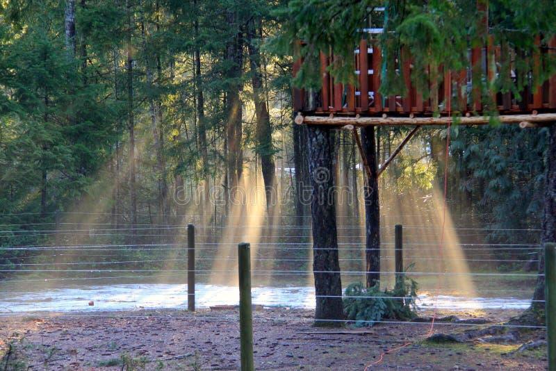 Esponga al sole il flusso continuo attraverso la foschia di primo mattino intorno ai sempreverdi immagini stock