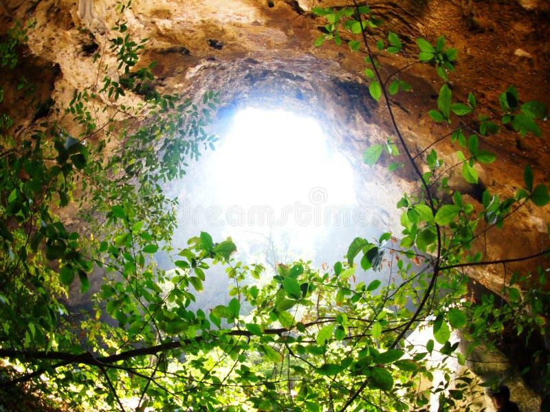 Esponga al sole il raggio luminoso con il punto di vista del raccolto del foro della caverna con l'albero verde della giungla immagini stock