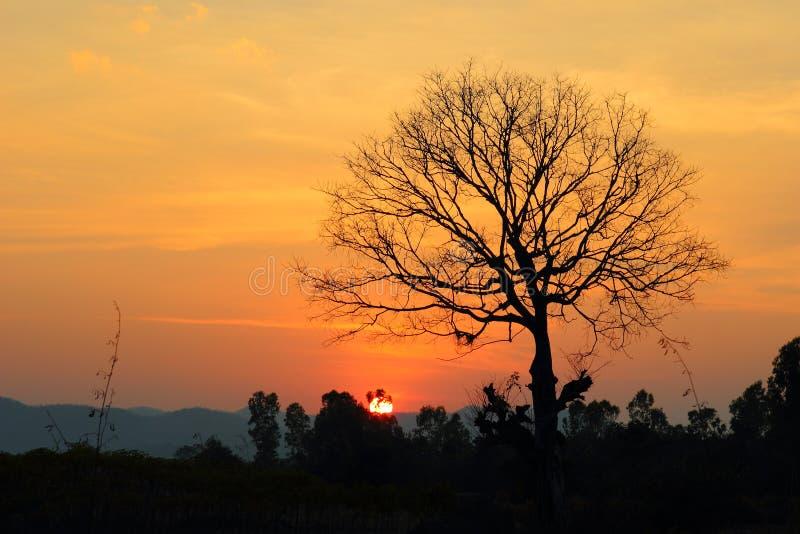 Esponga al sole la luce con gli alberi asciutti, il cielo, il tramonto fotografia stock