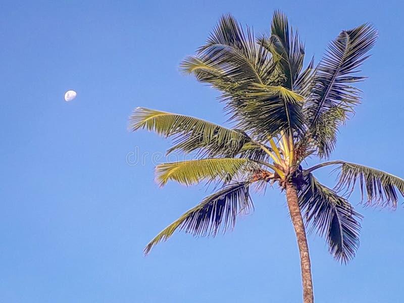 Esponga al sole sopra la spiaggia tropicale con il cocco a Oporto de Galinhas, Brasile Siluette delle palme e del cielo nuvoloso  immagine stock