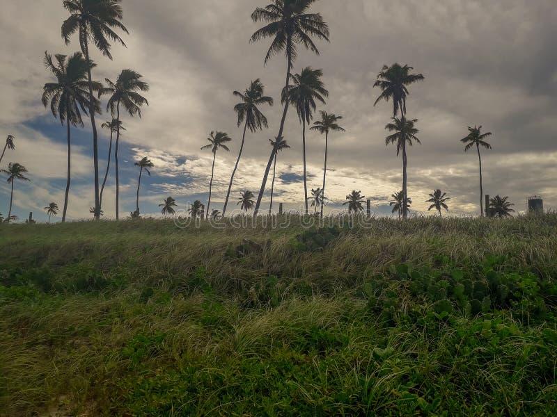 Esponga al sole sopra la spiaggia tropicale con il cocco a Oporto de Galinhas, Brasile Siluette delle palme e del cielo nuvoloso  immagine stock libera da diritti