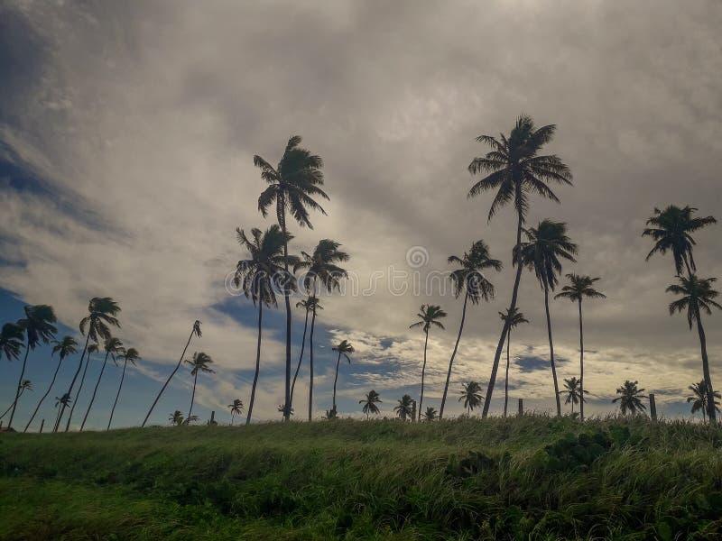 Esponga al sole sopra la spiaggia tropicale con il cocco a Oporto de Galinhas, Brasile Siluette delle palme e del cielo nuvoloso  fotografia stock libera da diritti