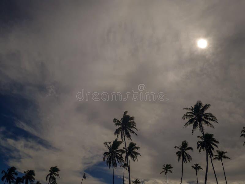 Esponga al sole sopra la spiaggia tropicale con il cocco a Oporto de Galinhas, Brasile Siluette delle palme e del cielo nuvoloso  fotografie stock