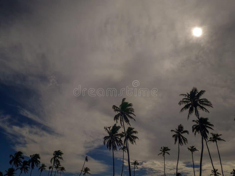 Esponga al sole sopra la spiaggia tropicale con il cocco a Oporto de Galinhas, Brasile Siluette delle palme e del cielo nuvoloso  immagini stock libere da diritti