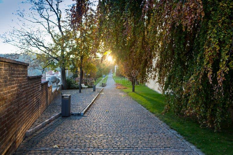 Esponga al sole splendere sopra la strada, il percorso, passaggio pedonale con l'alba del tramonto della foresta in Autumn Conife immagini stock